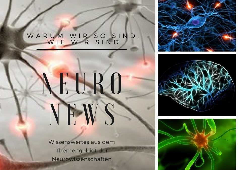 Neuro News: Führung & Motivation