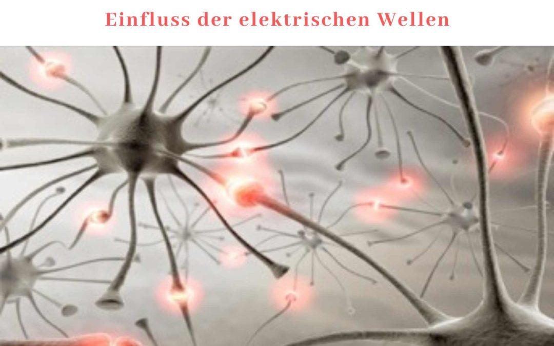Meditation Teil 3: Meditation und die vom Gehirn erzeugten elektrischen Wellen